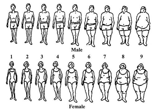 size chart people